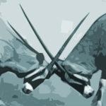 Konfliktmanagement Basis-Seminar: Konflikte frühzeitig erkennen und bewältigen